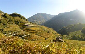 Cembra Cantina di Montagna: vini che nascono nel ventre delle vette trentine