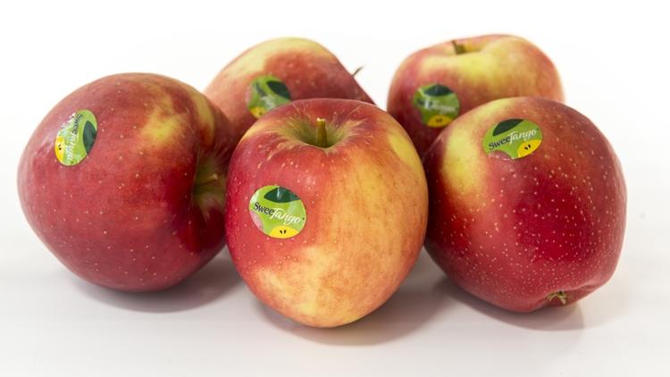 SweeTango®, cresce la domanda per la prima mela dell'estate