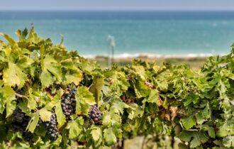 Consorzio Tutela Vini d'Abruzzo ottiene la menzione speciale al Premio Gavi La Buona Italia 2020