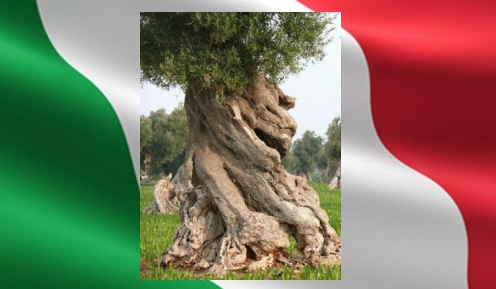 Olio EVO Italiano con Olive Italiane… EVOITALIA®: urge marchio unico a tutela degli uliveti Italiani e dei consumatori