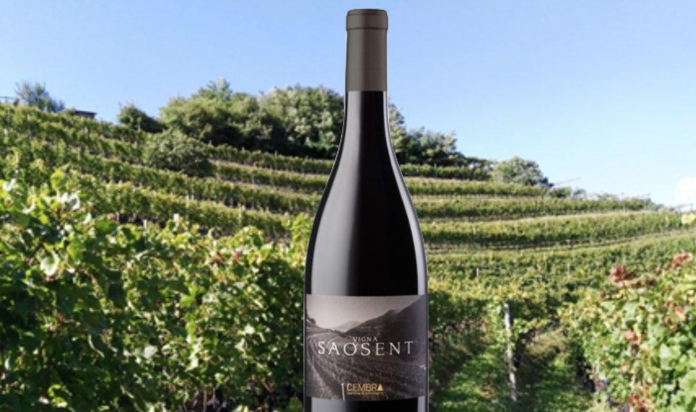 Pinot Nero Vigna Saosent: l'identità della Val di Cembra