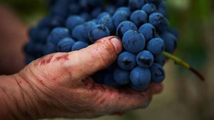 """I """"Tre Bicchieri"""" Gambero Rosso arrivano sui Colli Bolognesi: dal Pignoletto alla Barbera i vini premiati da guide e concorsi"""