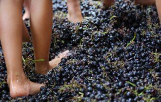 Festa della Vendemmia a Villaggio Fontanafredda: sabato 12 e domenica 13 settembre il #Greenparty nel cuore delle Langhe tra buona musica, cibo e vino
