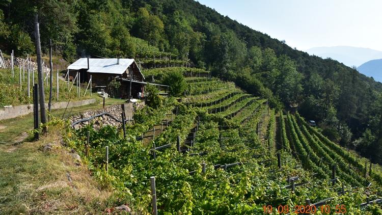 Cembra Cantina di Montagna: Vigna delle Forche, culla di una viticoltura eroica a 872 m