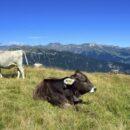 Latte Alto Adige, tradizione e innovazione al femminile