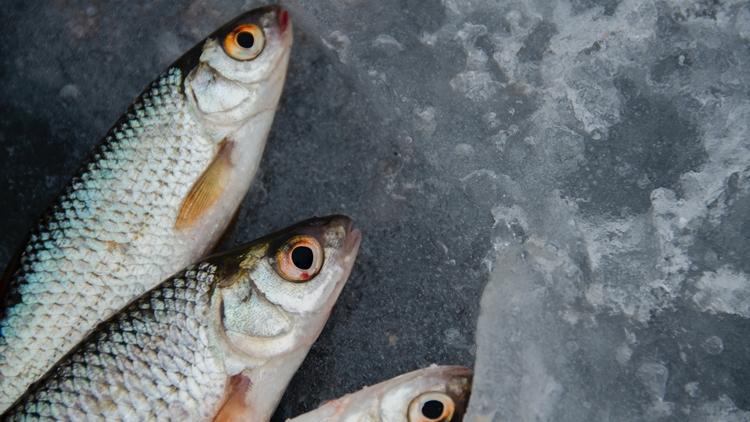 Foody Mercato Agroalimentare Milano, mercato ittico ad ottobre segnali di ripresa