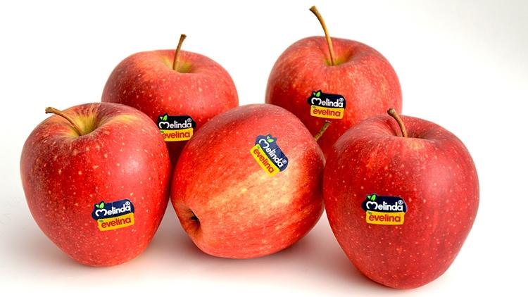 Melinda Evelina a Taiwan con Naturitalia, prima esportazione di mele italiane verso il nuovo importante mercato asiatico