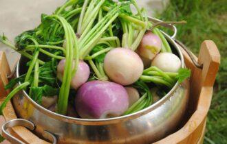 Dalle montagne del Friuli-Venezia Giulia quattro nuovi Presìdi Slow Food