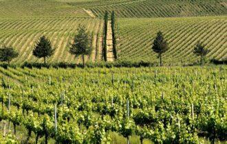 """USA e Cina """"nel mirino"""" dei Vini d'Abruzzo"""