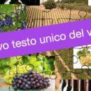 Consorzi di tutela e nuovo testo unico del vino – come dovrebbero cambiare