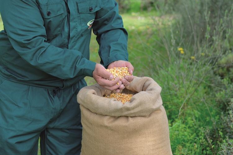 Aumento prezzi materie prime agricole, Amadori: serve confronto tra operatori, fondamentale ruolo distribuzione