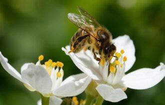Il LIDL in prima linea per la biodiversità: in fase di sviluppo il primo standard sulla biodiversità in agricoltura