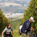 Vino italiano settore in profondo rosso, bianco e rosè… PNRR, Digitalizzazione, FIVI
