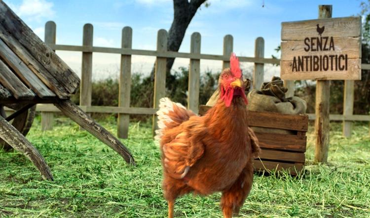 On air la nuova campagna adv Amadori dedicata al pollo Il Campese