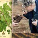 #VinoItaliaNews: BIODIVESITA' VITIVINICOLA – FAO E AGROECOLOGIA, NON GIOCHIAMO COL DNA DELLA VITIS VINIFERA