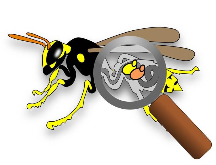 Perché le vespe sono afrodisiache per i lieviti e ne promuovono la biodiversità
