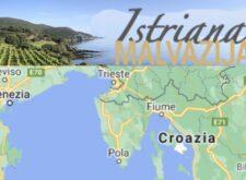 Malvasia Istriana, una Malvasia diversa, autentica che si racconta, che arriva direttamente a casa