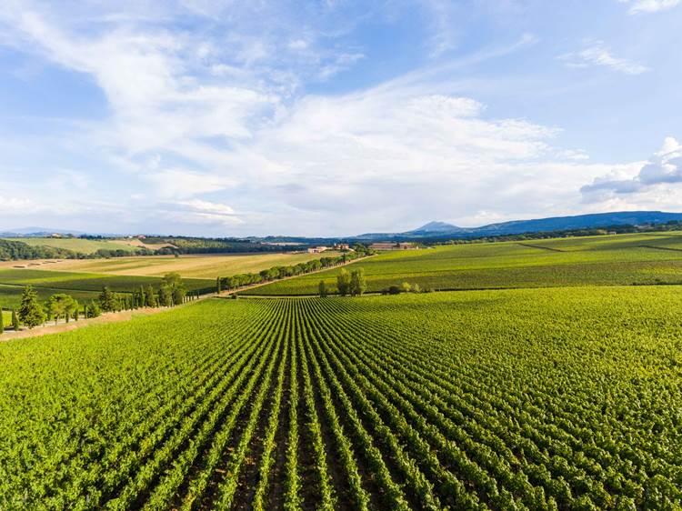 Camminare le vigne: per la prima volta Carpineto apre la sua tenuta più bella e maestosa al pubblico