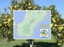 Bergamotto di Reggio Calabria IGP, una speranza per far ripartire il territorio e dare un futuro ai giovani Calabresi – Intervista a Rosario Previtera