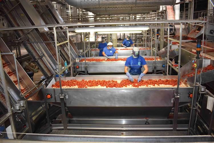 Pomodoro, Conserve Italia pronta ad assumere oltre 1.300 lavoratori stagionali