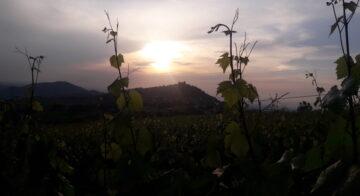 Calyx Turismo: TRAMONTO DiVino Alla cantina Ca' del Ge'… passeggiata panoramica al tramonto sulla costa del vento, con visita cantina e degustazione di vini