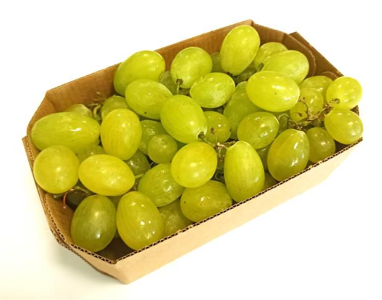 Brio, campagna uva biologica 100% italiana al via: alte aspettative per un mercato in costante crescita