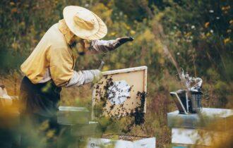 Alfonsino adotta 60mila api per contribuire alla salvaguardia della specie e preservare la biodiversità