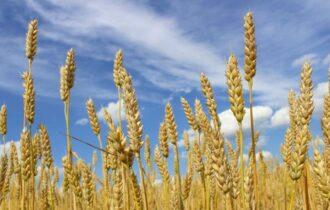 Commodity agricole e prezzi pazzi, confronto internazionale alla conference 2021 IGC