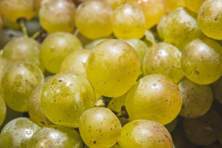 Il Lugana DOC brinda all'estate: via libera a tutto il vino stoccato nel 2020