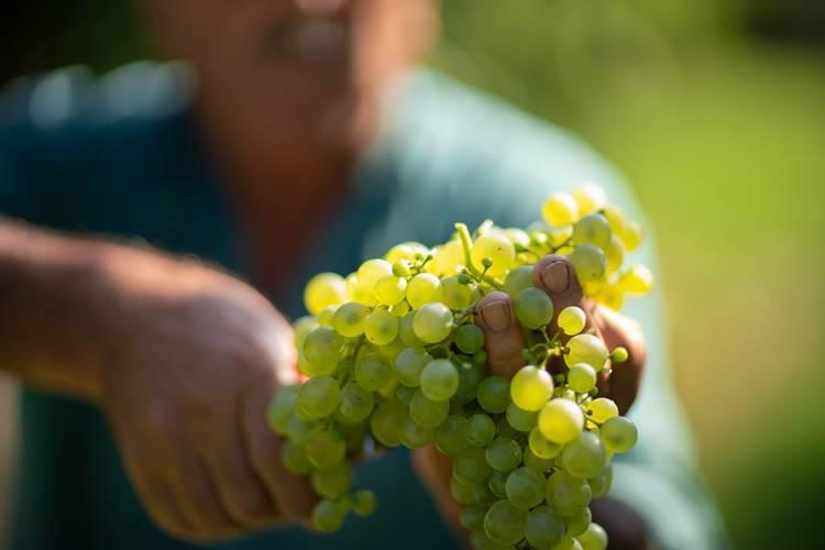 Prosecco sostenibile per Collis Wine Group