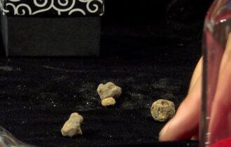 A Pergola l'asta per 'il tartufo più piccolo al mondo'. Il bianco pregiato battuto a 2milioni di euro al chilo