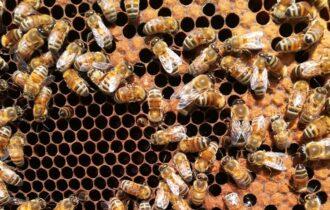 Covid-19: le api bioindicatori con BeeNet