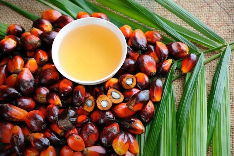 Olio di palma sostenibile per il clima