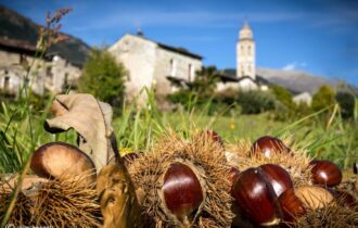 La regina dell'autunno: la castagna… non solo da mangiare!